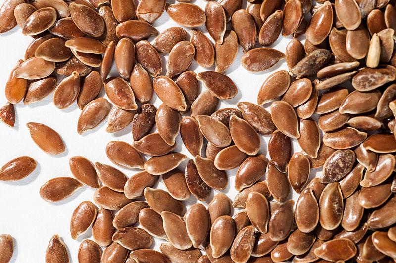 File:Linum usitatissimum - Seeds.jpg