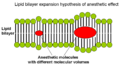 Lipid bilayer expansion hypothesis of anesthetic effect.png
