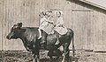 Little girls sitting on the back of a cow.jpg