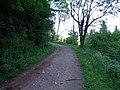 Llwyn Celyn Forestry Walk - geograph.org.uk - 437279.jpg