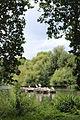 London, St. James's Park IMG 1872.JPG