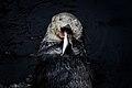 Lontra no Oceanário de Lisboa -2 (26661847868).jpg