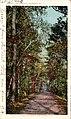 Lovers' Lane, Aiken, SC (NBY 429312).jpg
