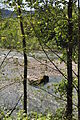 Lower Sauk River 02.jpg