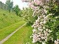 Ludwigsfelde - Wanderweg (Footpath) - geo.hlipp.de - 37962.jpg