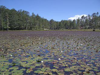 Peshkopi - Image: Lura Liqeni i Lulëve