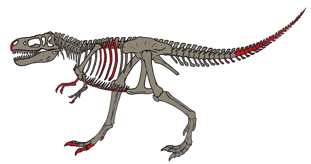MOR555 skeletal material.JPG