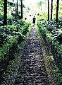 Madeira Downpath (2686495668).jpg