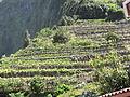 Madeira em Abril de 2011 IMG 1574 (5661371093).jpg