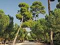 Madrid, El Retiro (38625186411).jpg
