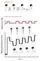 MagneticSequencingViaLigation3.jpg