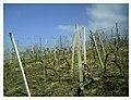 March Denzlingen - Master Season Rhine Valley Photography - panoramio (6).jpg