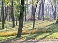 Mariinsky park in the autumn. Fallen leaves(4).jpg