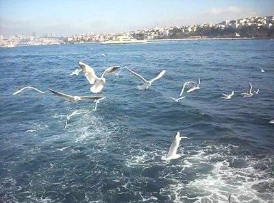 File:Martılar & İstanbul Boğazı - Şubat 2013.ogv