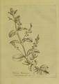 Medical Botany-1790-1-0053.png