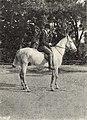 Mikszáth horpácsi birtoka 1 (Vasárnapi Ujság, 1905).jpg