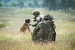 Military Working Dogs undergo Live Fire Tactical Training. MOD 45160287.jpg