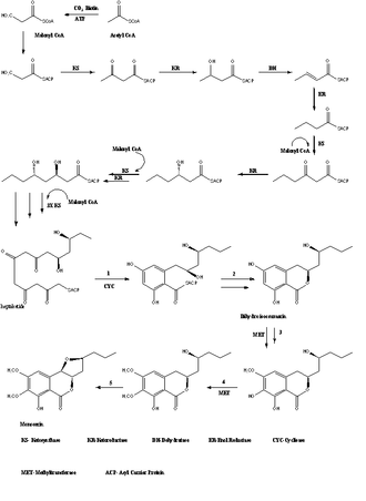 Monocerin - Figure 1. Biosyntheis of Monocerin