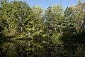 Morning at Ashton Pond 1.jpg