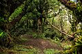 Moruy Peak at Cerro Santa Ana - En el Picacho Moruy del Cerro Santa Ana (22941026431).jpg