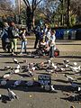 Mother Pigeon in crowd at Union Square Park 2015.jpeg