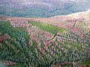Mountain Pine Beetle damage in the Fraser Experimental Forest 2007.jpg