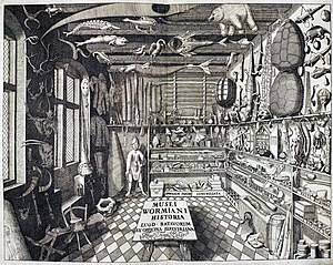 "Cabinet of curiosities - ""Musei Wormiani Historia"", the frontispiece from the Museum Wormianum depicting Ole Worm's cabinet of curiosities."