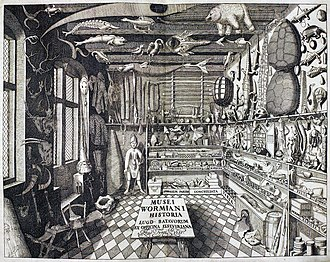 Antiquarian - Ole Worm's cabinet of curiosities, from Museum Wormianum, 1655.