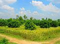 Muzaffar Orchard.jpg