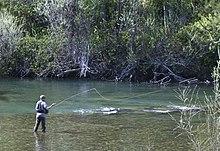 Trinity river california wikipedia for Trinity river fishing spots