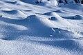 Myrtillier sous la neige.jpg