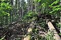 NPR Boubínský prales 20120910 09.jpg