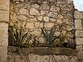 Nablus wall plants Victor Grigas 2011 -1-96.jpg