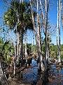 Naples Swamps 02.jpg