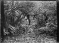 Native bush and stream at Korokoro. ATLIB 273161.png
