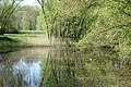 Naturschutzgebiet Chemnitzaue bei Draisdorf. 13.jpg