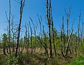 Naturschutzgebiet Emsdettener Venn 26.jpg