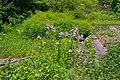 Neuer Botanischer Garten Marburg - 0026.jpg