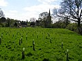 New plantation to the rear of Heydour church - geograph.org.uk - 410899.jpg