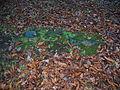 Newfarm Loch - remains of sluice.JPG