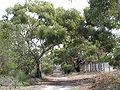 OGNR walking track.jpg