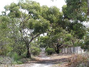 Ocean Grove Nature Reserve - Reserve walking track