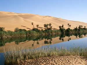 An Ubari oasis lake, with native grasses and date palms.
