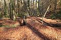 Odenthal - Naturschutzgebiet Dhünnaue - Unterer Bülsberger Siefen 02 ies.jpg