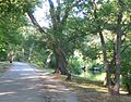 Olmsted-Park.jpg