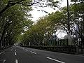 Omotesando - panoramio - chatani.jpg