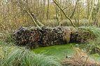 Ontwortelde met rijp bedekte els (Alnus) en berk (Betula) ('It Wikelslân). Locatie, De Alde Feanen in Friesland.jpg