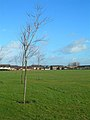 Open Space - geograph.org.uk - 667804.jpg