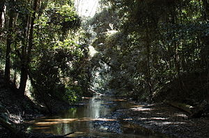 Ourimbah Creek - Ourimbah Creek