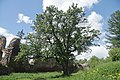 Overview of lime tree near Žumberk Castle in Žumberk, Chrudim District.jpg